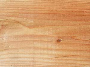 British Larch Close Up