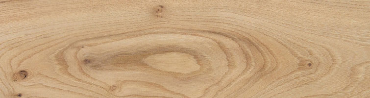 European Elm grain picture