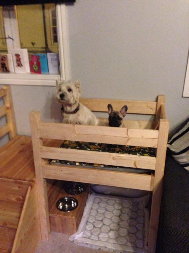 Picture of: Dog Bunk Beds Gallery